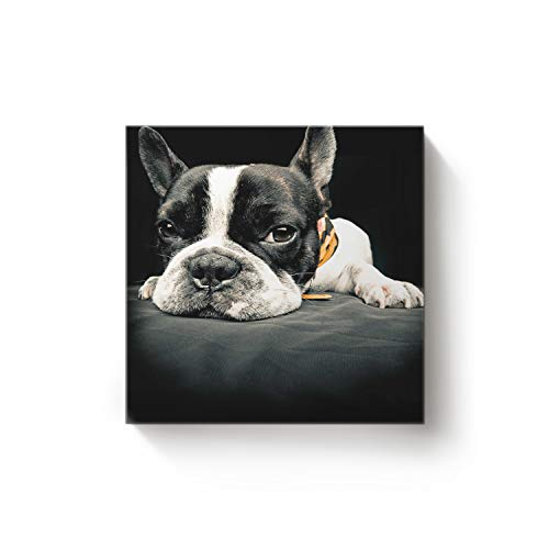EZON-CH Square Canvas Wall Art Oil Painting Christmas Office Home Decor,Funny Bulldog Dog Black Artworks,Stretched by Wooden Frame,Ready to Hang,16 x 16 -