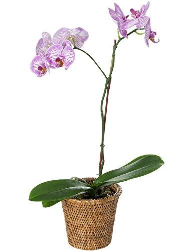 KOUBOO 1080025 La Jolla Handwoven Rattan Planter, Small, Honey Brown