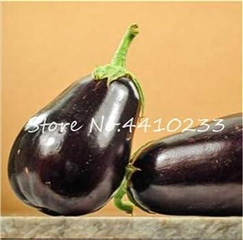 SVI Fresca 100pcs semillas de vegetales de la berenjena por un ...