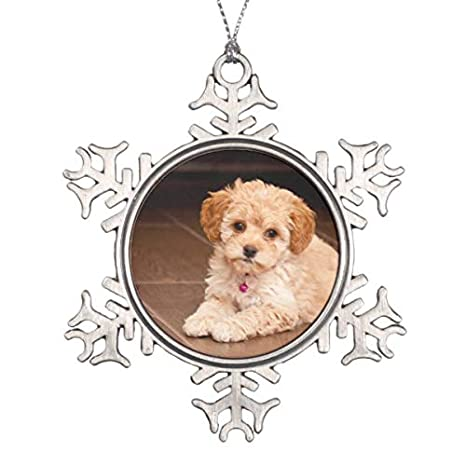 Baby Maltese Poodle Mix Or Maltipoo Puppy Dog Snowflake Pewter Christmas  Ornament - Amazon.com: Baby Maltese Poodle Mix Or Maltipoo Puppy Dog Snowflake