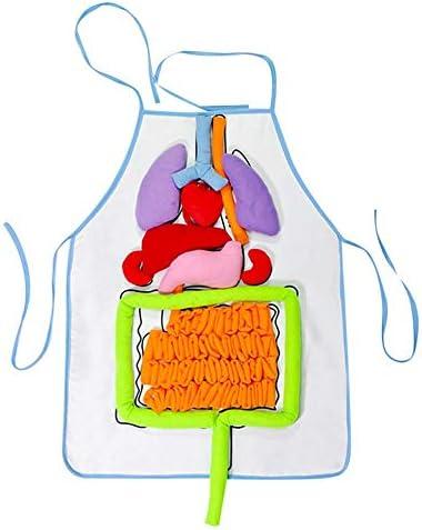 Yunt Delantal de órganos, educación Escolar Ayudas para la enseñanza Simulación Diagrama de órganos de órganos Humanos 3D Delantal para el Desarrollo de Habilidades básicas para niños Juguete: Amazon.es: Hogar