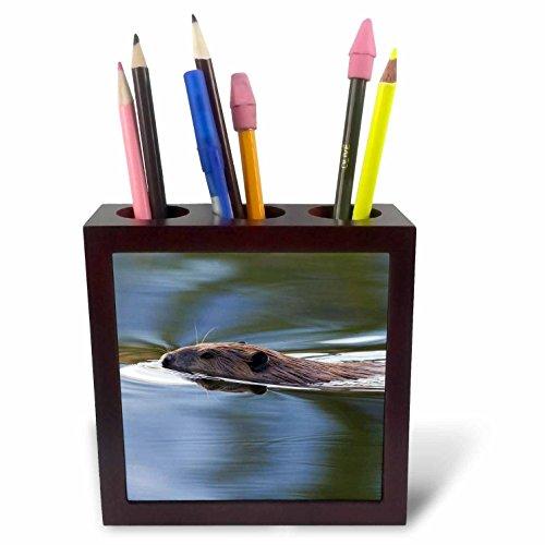 - 3dRose Danita Delimont - Beavers - American Beaver Swimming in Pond - 5 inch tile pen holder (ph_278035_1)