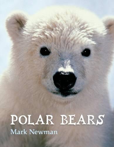 polar bear book - 6