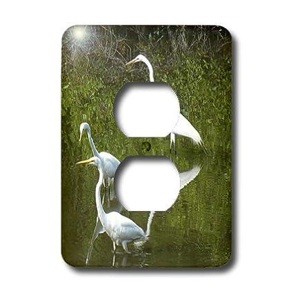 3dRose lsp/_7353/_6 Snowy Egrets 2 Plug Outlet Cover Multicolor