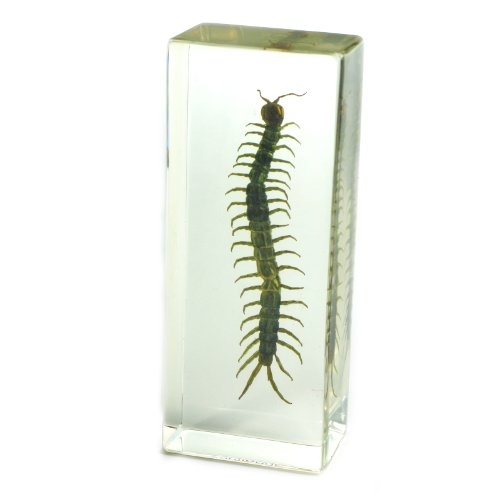 REALBUG Centipede Paperweight (1 5/8 x 4 3/8 x 1 1/8