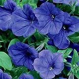 Outsidepride Petunia Grandiflora Blue - 250 Seeds