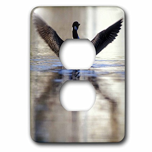 Danita Delimont - Birds - Minnesota, Common Loon bird, Leech Lake - US24 PHA0005 - Peter Hawkins - Light Switch Covers - 2 plug outlet cover ()