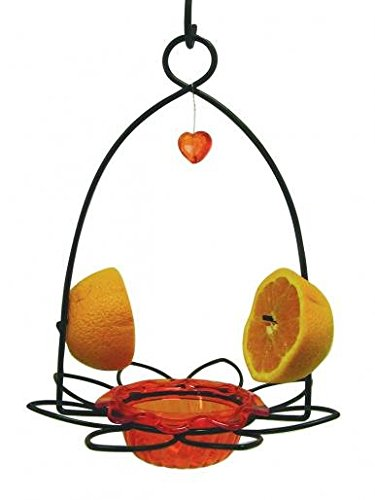 (Birds Choice Flower Oriole Bird Feeder Small Orange)