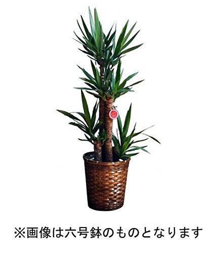 ユッカ 8号 陶器鉢 (角: 白) B00IPCD6HY 8号|陶器鉢 (角: 白)