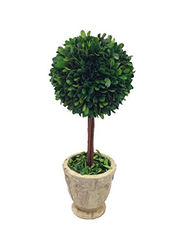 Single Topiary - Flora Decor Preserved Boxwood Topiary Single Ball w/Footed Pot 16