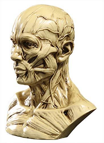 Funnuf Human Model Craft Anatomy Skull Head Muscle Bone Medical Artist Drawing Study, 4 Inch, Yellow