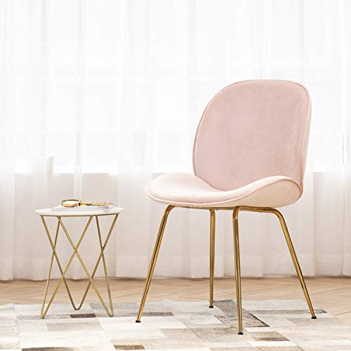 Art Leon Velvet Pink Shell Chair Soft Upholstered Modern Beetle Accent Chair with Champagne Color Legs for Living Room Bedroom Reception Room Vanity Elegant Design Furniture