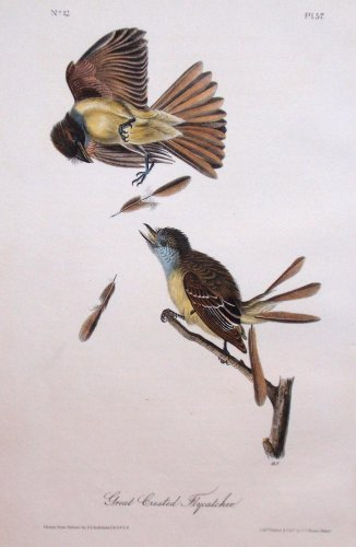 Audubon Octavo Prints - Plate 57 - Great Crested Flycatcher