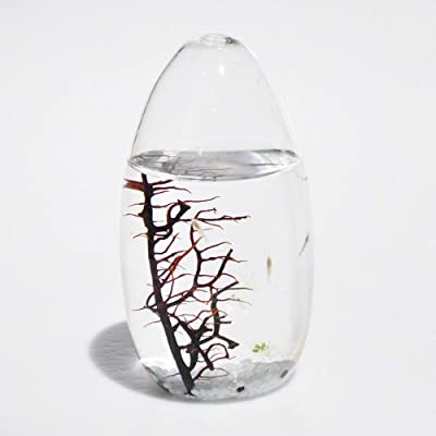 EcoSphere Closed Aquatic Ecosystem, Pod