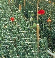 Hortonova 9fa 48''x3280' Plant Support & Trellis by Tenax