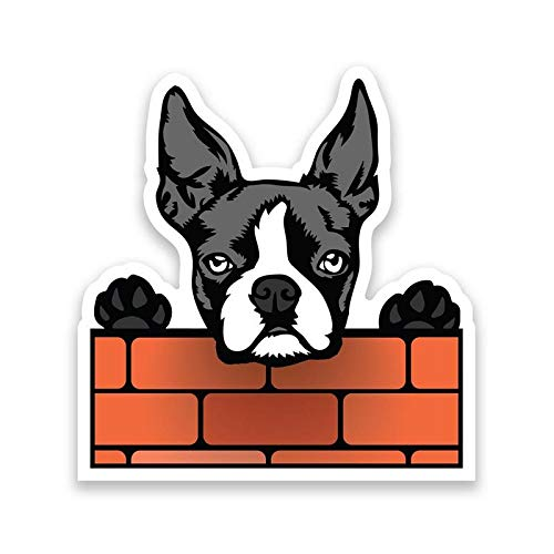 More Shiz Boston Terrier Dog Peeking Over Wall Vinyl Decal Sticker - Car Truck Van SUV Window Wall Cup Laptop - One 6.5 Inch Decal - ()