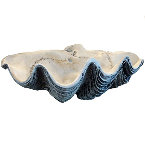 Giant Clam Shell 22 Inch White Gray Clamshell Seashell (Bowl Large Shell)