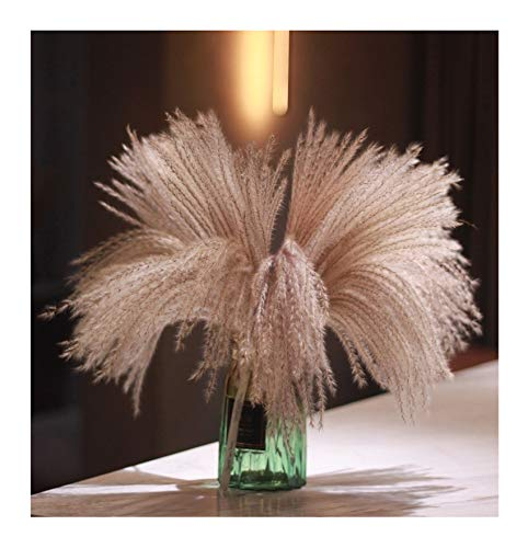 Fluffy Pampas Grass Reed Flower, Real Natural Dried Plant Flower Bunch Decoration for Vase Filler, Festival Christmas Ornaments Wedding Boho Home Decor