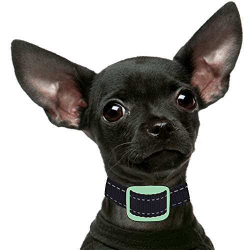 Our K9 Training Made Easy Bark Collar for Small Dogs Using Ultrasonic & Vibration. 100% Pain-Free - 100% Safe...