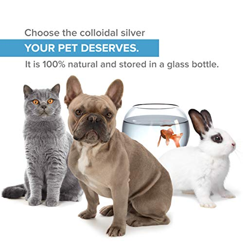 Top Quality Colloidal Silver Spray for Pets (Dogs, Cats, Fish) ● 100ml & 40ppm ● 100% Natural ● Superior Concentration, Smaller Particles = Better Results ● Laboratory Certified ● For Ear, Eyes, Skin