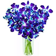 Fresh Cut Flowers - Blue Dendrobium Orchids -Bom Sonia with Free Vase