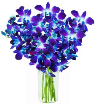 Fresh Cut Flowers - Blue Dendrobium Orchids -Bom Sonia with Free Vase by eflowerwholesale