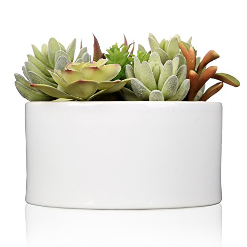 The 8 best succulent plants with white flowers
