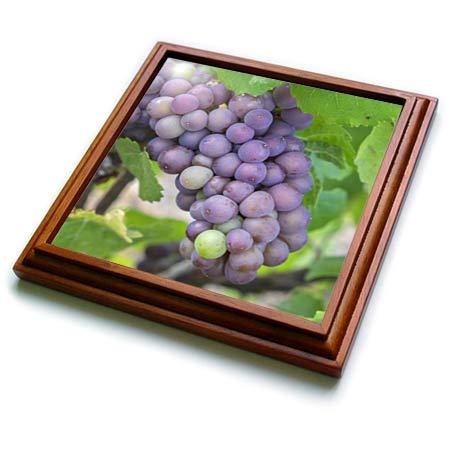 3dRose Danita Delimont - Vineyards - Grapes on vine, Skaneateles, New York, USA. - 8x8 Trivet with 6x6 ceramic tile (trv_314957_1)