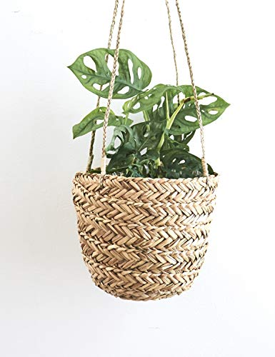 Natural Seagrass Hanging Planter Handmade Indoor Flower Pot Holder for Succulents, Air Plants and Small Cacti