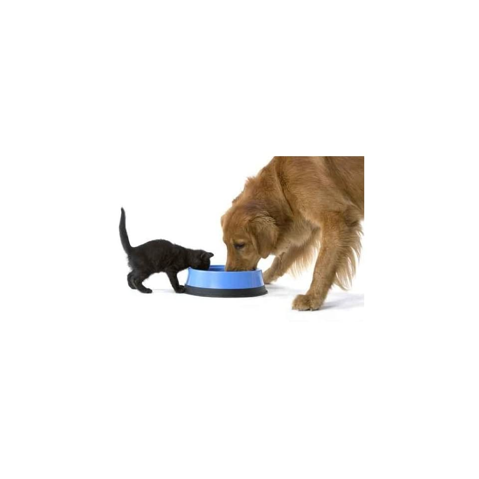 Kitten and Golden Retriever Dog Share a Bowl of Food