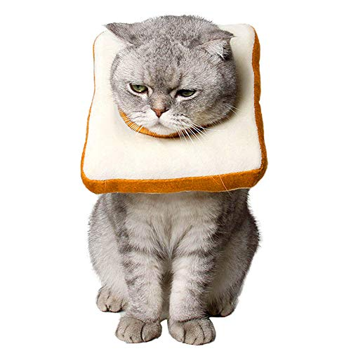 collar isabelino para gatos forma de tostada pan