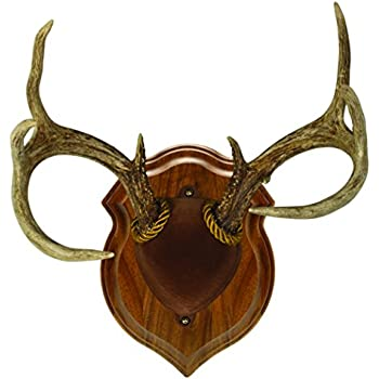 Amazon.com: Walnut Hollow Country Deluxe Antler Display ...
