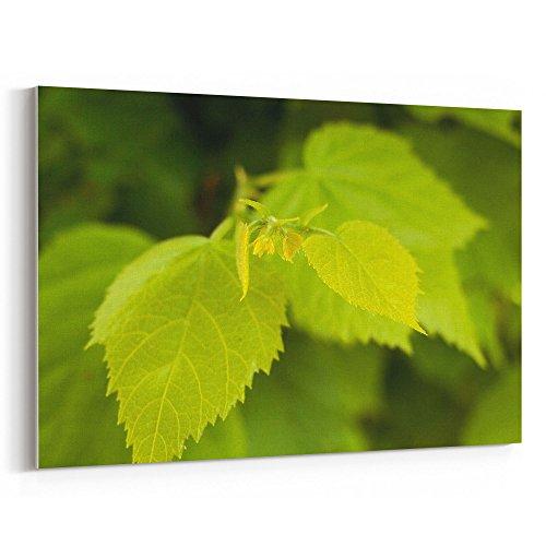 Cheap  Westlake Art - Tree Leaf - 12x18 Canvas Print Wall Art -..