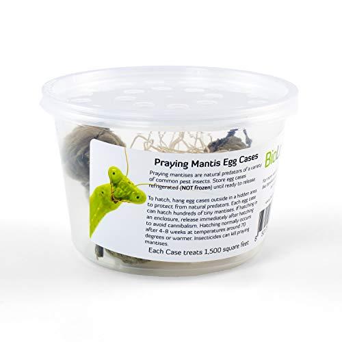 Biologic Company Inc Praying Mantis Egg Cases 2 Extra Large