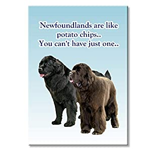 Newfoundland Can't Have Just One Fridge Magnet 14