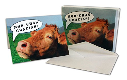 Thank You Cards – Cow – Humor – Moochas Gracias – Blank on the Inside – Includes 24 Cards and Envelopes – 5.5″ x 4.25″(24 Pack)
