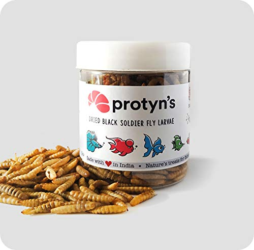 ProtynGrubs Whole Dried Black Soldier Fly Larvae Treat - Food for Arowana, Flowerhorn, Oscar and Other Carnivorous Fish - High Protein and 50x More Calcium Than Mealworm (50 g)
