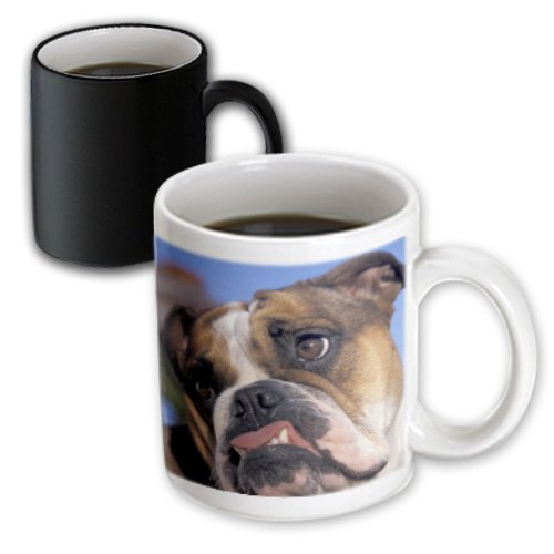 3dRose English Bulldog-NA02 MWE0138-Michele Westmorland Magic Transforming Mug, 11-Ounce Michele Magic