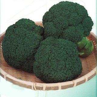 ブロッコリー 種 【 おはよう 】 ペレット5000粒 B01L891U0A