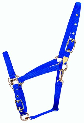 Hamilton 3/4-Inch Nylon Arabian Horse Halter with Adjustable Chin and Throat Snap