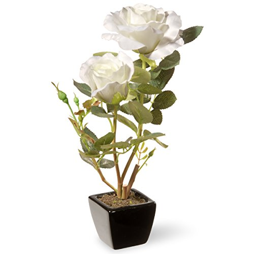 (National Tree 12.5 Inch White Rose Flowers with Black Square Ceramic Base (NF36-5144S-1))