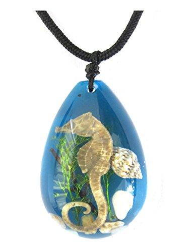 Seahorse Seashells Underwater Plant Background product image
