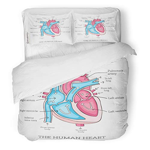 Emvency Decor Duvet Cover Set Full/Queen Size Human Heart Anatomy Educational Diagram Showing Blood Flow Main 3 Piece Brushed Microfiber Fabric Print Bedding Set Cover -
