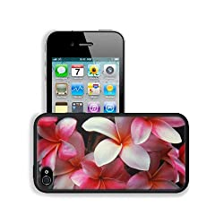 Plumeria Shrubs Flowering Pink Beauty Apple iPhone 4 / 4S Snap Cover Premium Leather Design Back Plate Case