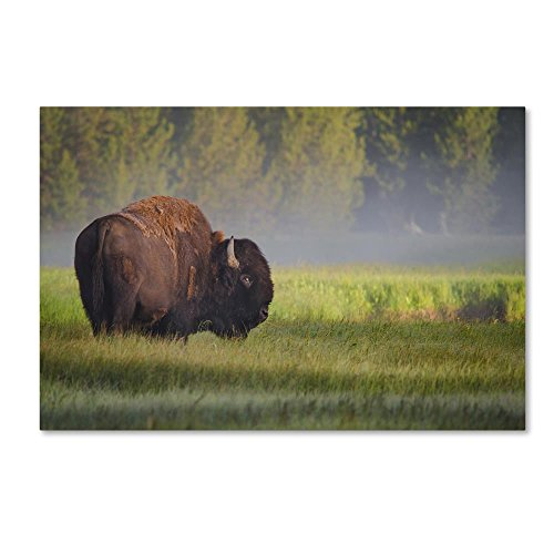 (Bison In Morning Light by Sandipan Biswas, 22x32-Inch Canvas Wall Art)