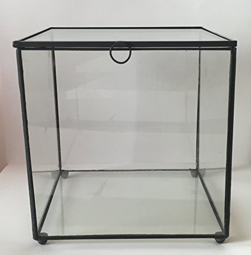 Glass Display Box (6