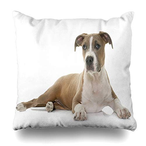 Ahawoso Throw Pillow Cover Square 18x18 Brown Dog Puppy American Staffordshire Terrier Pet Front White Guard Pitbull Studio Zippered Cushion Case Home Decor Pillowcase