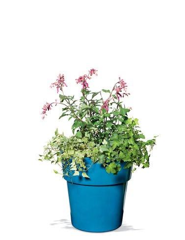 Sonoma Planter (Sonoma Self-Watering Planter, Small)
