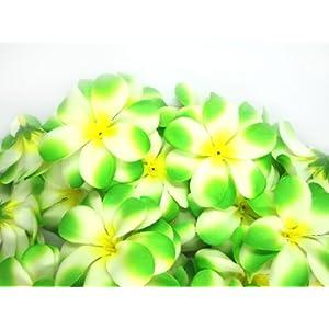 "(100) Cream Green Hawaiian Plumeria Frangipani Silk Flower Heads - 3"" - Artificial Flowers Head Fabric Floral Supplies Wholesale Lot for Wedding Flowers Accessories Make Bridal Hair Clips Headbands Dress 115"