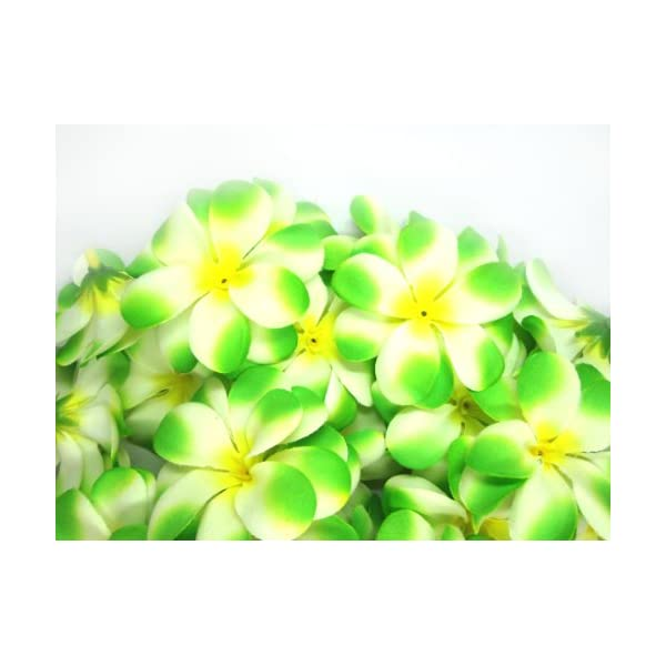 (100) Cream Green Hawaiian Plumeria Frangipani Silk Flower Heads – 3″ – Artificial Flowers Head Fabric Floral Supplies Wholesale Lot for Wedding Flowers Accessories Make Bridal Hair Clips Headbands Dress